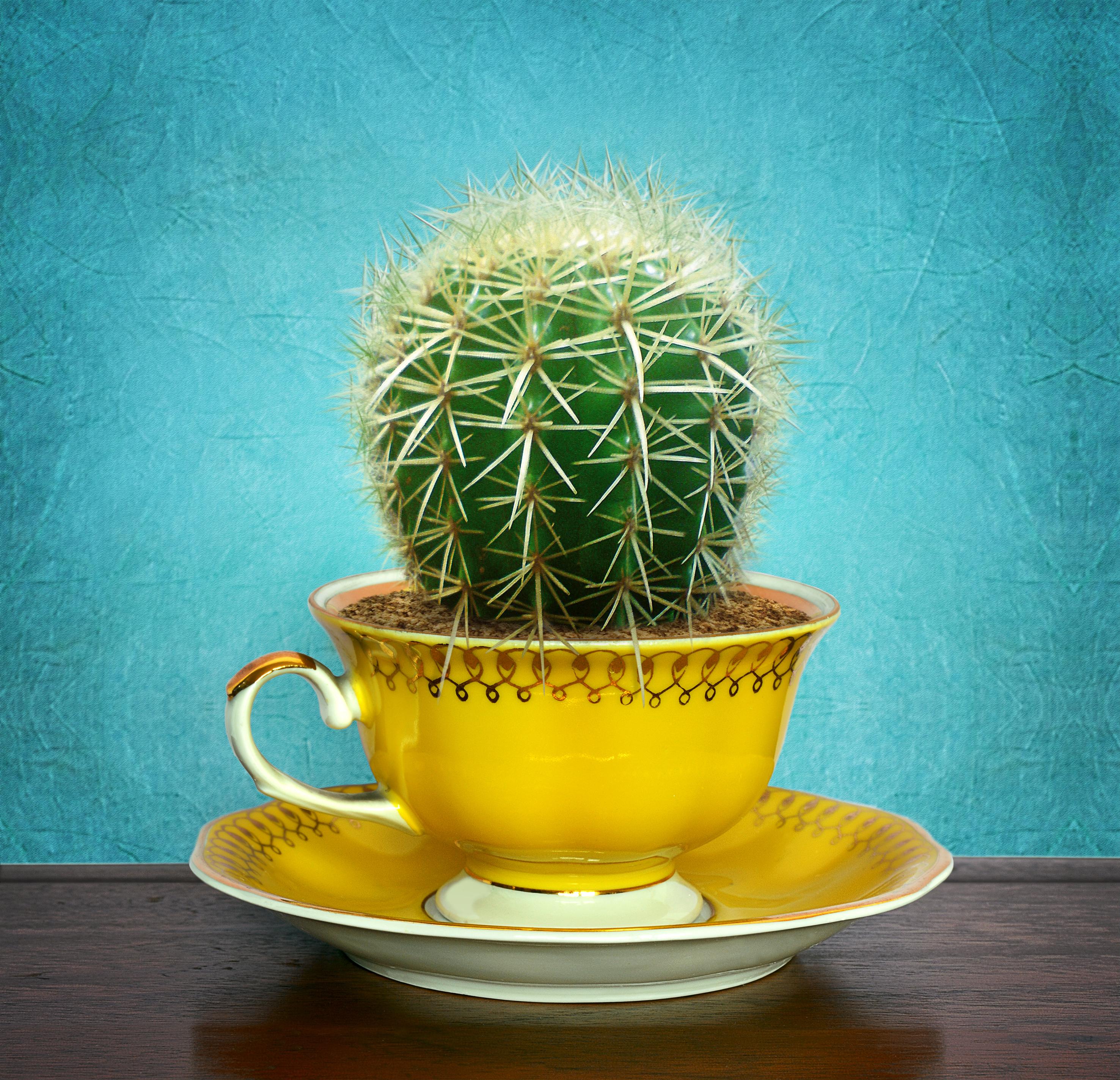Cactus in cup