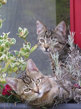 11 les chats.JPG