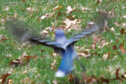 SpringPhoto-bird
