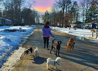 dog-walking.jpg