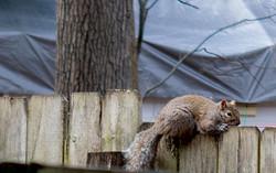 SpringPhoto-squirrel
