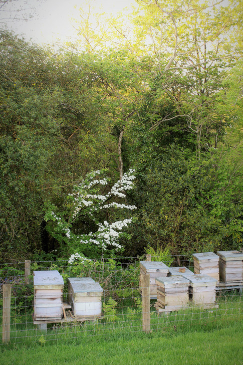 The Bee hives down by our woodland area.