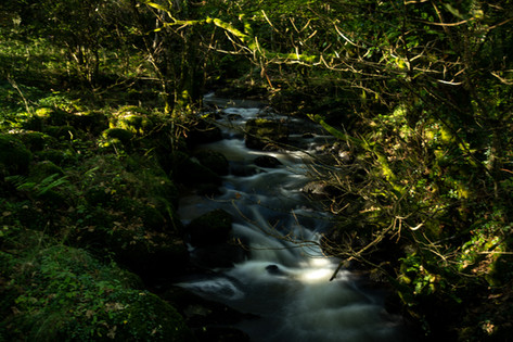 The stream down in our woodland area.