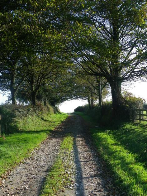 View up the farm lane
