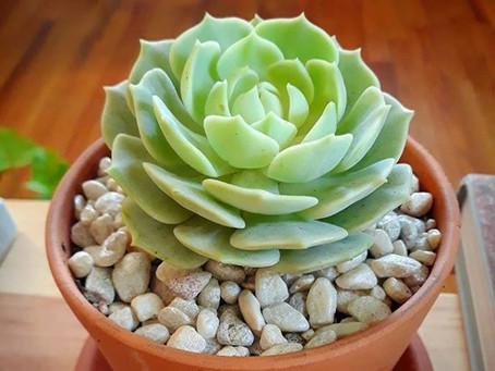 Succulents, Part 1