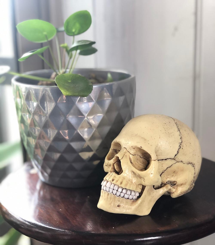 Craniosacral, Skull, Cranium