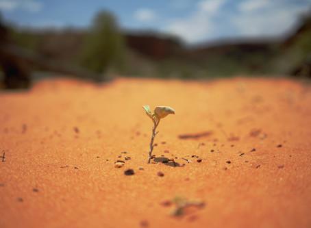Building Organizational Resiliency