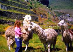 Me feeding Llamas, Machu Picchu
