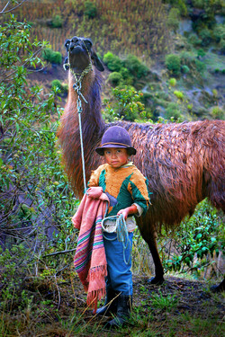 Llama girl, Ecuador