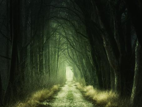 THE SCISSOR FOREST.