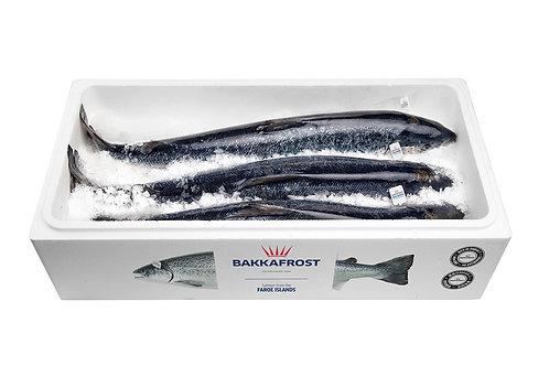Сёмга охлаждённая потрошёная с головой 7/8кг Фарерские Острова (цена за кг)
