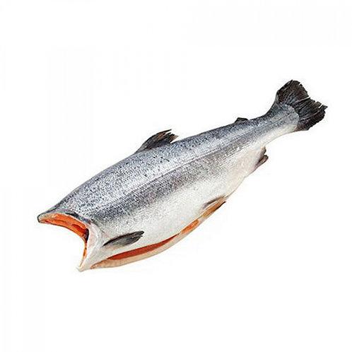Форель с/м потрошёная без головы морская весовая 1,4-1,8кг Турция (цена за 1кг)