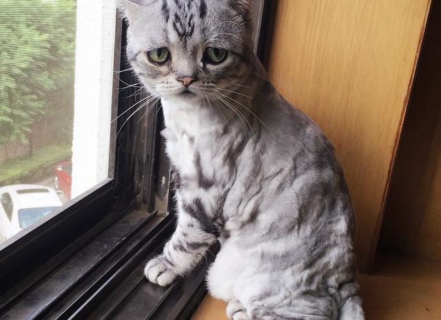 Sad-Cat-in-Window.jpg