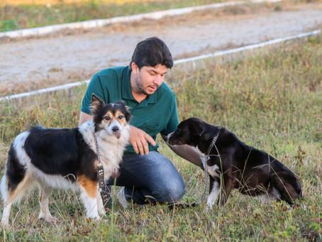 Fagner solicita ações de bem-estar para animais que vivem na CEACA