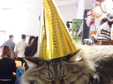16 декабря, суббота, 18.00 | Празднуем день рождения нашего котокафе!