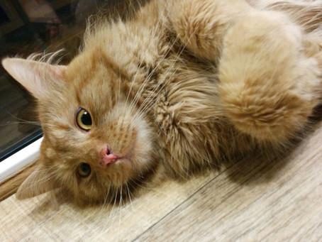 К нам приехал рыжий кот Пряник