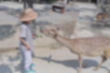 肉拉。旅行途中  拾日包棟民宿  鹿境