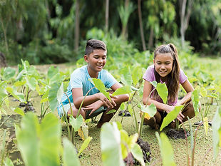 Young boy and girl in lo'i patch.