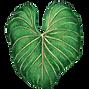 Taro Leaf Verticle (1).png