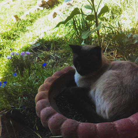 Pot cat with a view.jpg
