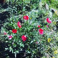 Some late summer garden lovin'.jpg