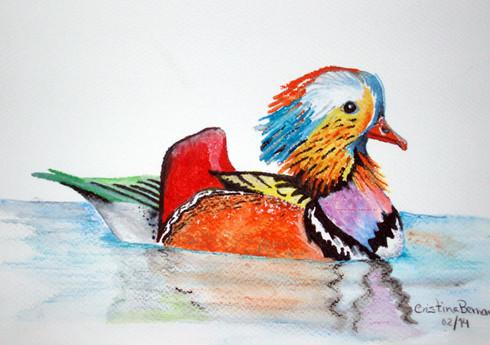 Pato Japonês