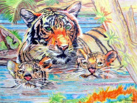 Tigre Indiano