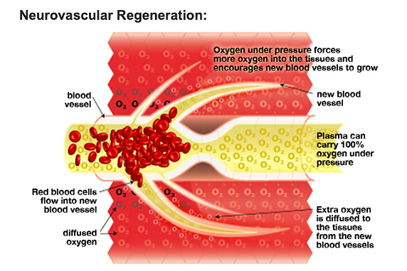 Neurovascular Regeneration.png