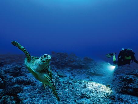 保護地球 恆動不息 勞力士取之大地 回饋大地攜手BBC推出海洋紀錄片