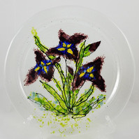 Grandma's Garden Iris
