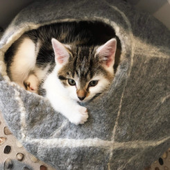 Grey marble cat cave