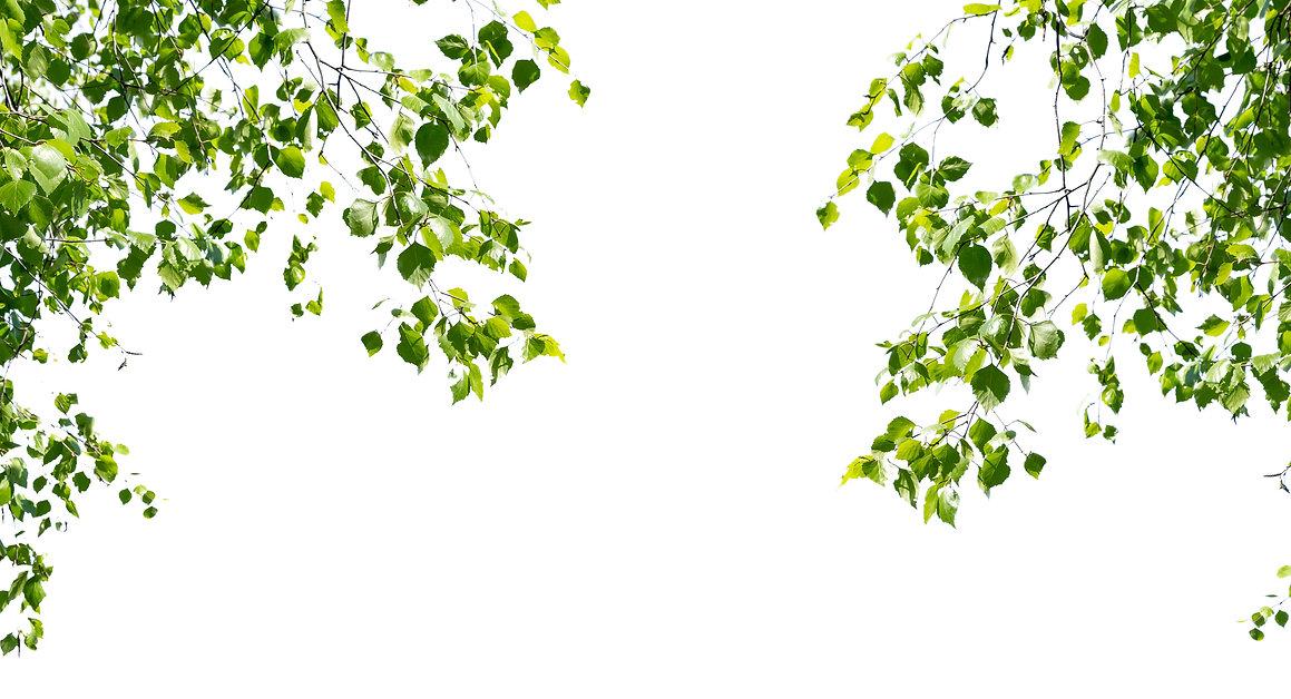 Double Birch_twigs.jpg
