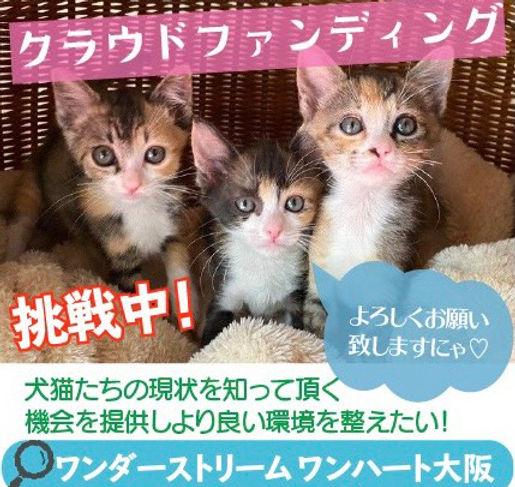 ポスター子猫.jpg
