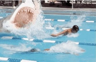 Betsy Matheney fun fact shark.jpg
