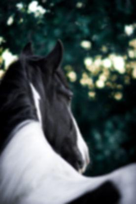 horse-3543293_960_720.jpg