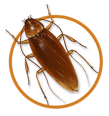 NEW Cockroach Icon.png