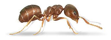 Moisture Ant.jpg