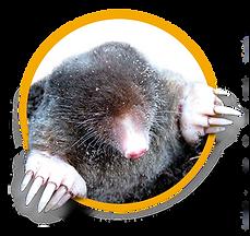 New Mole Service Icon.png