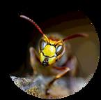 Stinging Pests.png