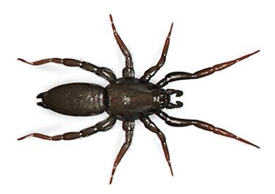 Ground Spider.jpg