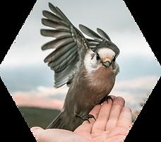 Bird in Hand - Hex.png