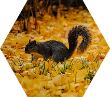 Fall Squirrel.png