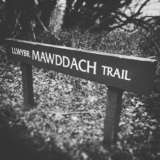 Mawddach trail