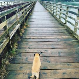 The bridge at Barmouth
