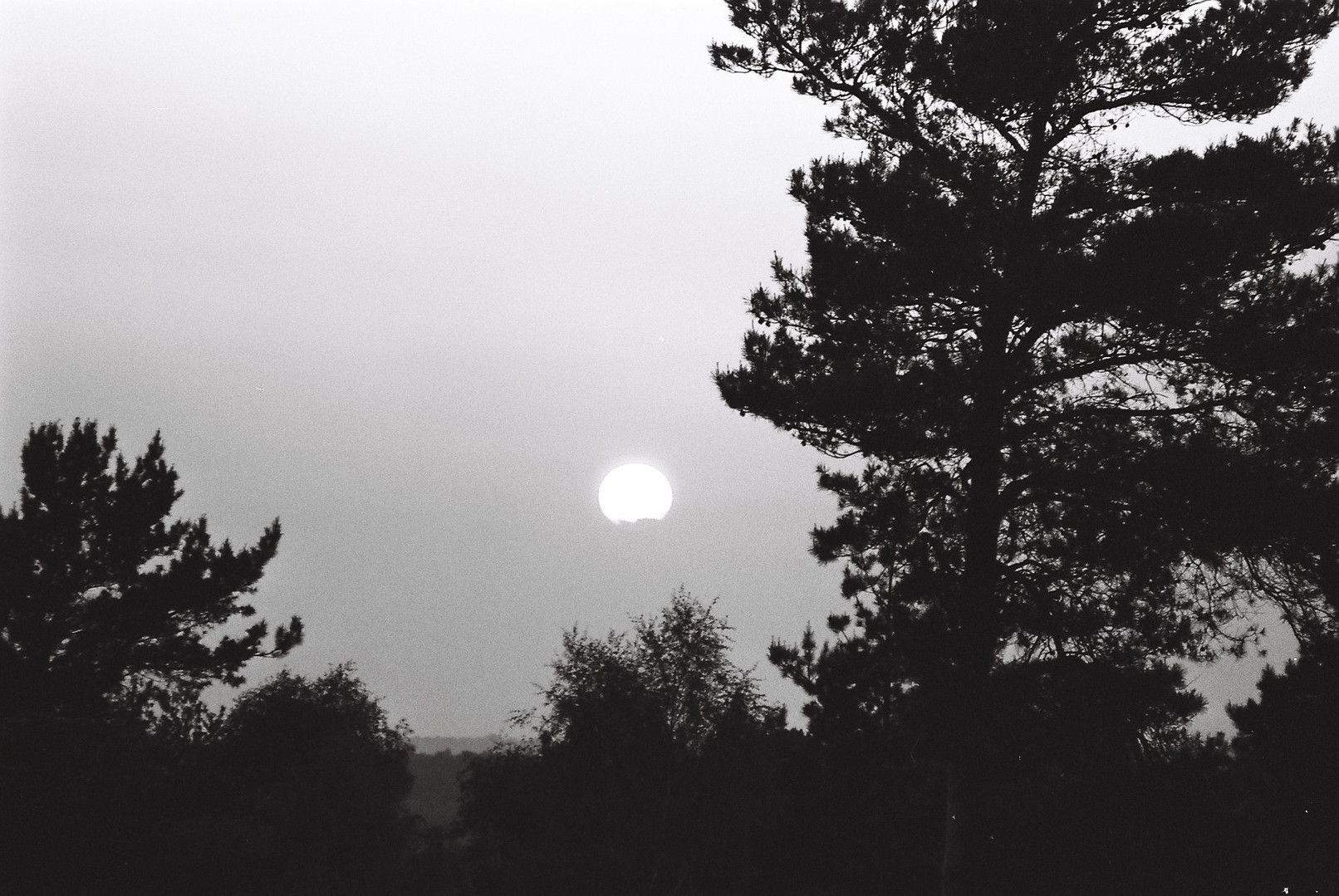 Ashdown Forest photography