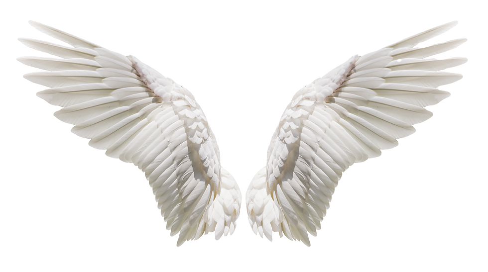 Angel%20wings%20isolated%20on%20white%20