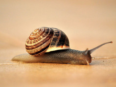 Sharks, snails and starvation - 3 things that destroy founders and their companies