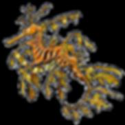seadragon-web.png