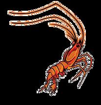 deep-shrimp.png