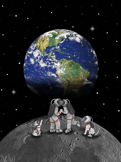 Vivir juntos + mascotas
